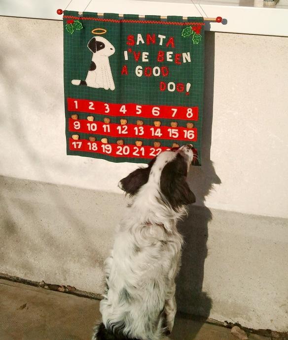 Franky és az adventi naptárja :)