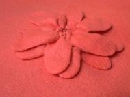 korall virág
