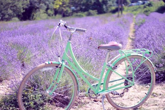 szedjünk levendulát biciklivel :)