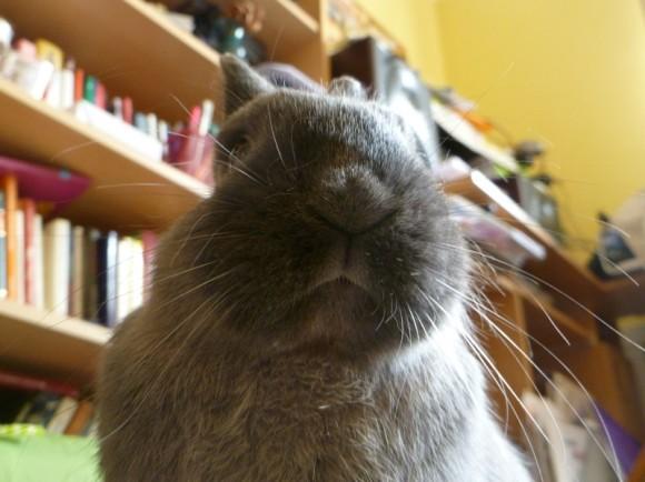bunny pride